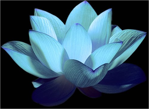Blue Lotus Buddhism